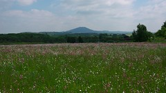 Wrekin from Venus Bank (David_W_1971) Tags: lumix panasonic g5 20mmf17 silkypix5