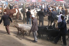 Ivan Bazaar (wfung99_2000) Tags: china animal market ivan xinjiang kashgar bazaar livestock