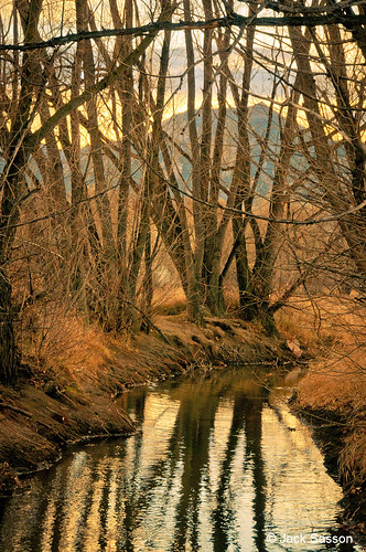 Photo - Tree Reflections - Cottonwood trail