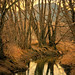 Tree Reflections - Cottonwood trail
