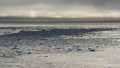 Banchisa blu (Puma 68) Tags: arctic sole acqua artico ghiaccio banchisa 78°n sigmaapo120400mmf4556dgoshsm