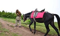 Horse & Man | Timeless (Ameer Hamza) Tags: old pakistan horse man work walk blogger single paya brisk northernpakistan ppa pakistaniphotographer northernareasofpakistan ameerhamzatravels ameerhamzaphotography