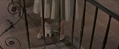 White Kitten and White Shoes (annacarvergay) Tags: white animal cat kitten shoes 1954 railing namethatfilm unnamed 1950sfashion ntf dorothymcguire