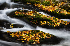 Flowing between leaves (Amedi Photography) Tags: autumn orange green leaves yellow nationalpark rocks colorful stream fallcolors moth fallen lush smokymountainsnationalpark smoothwater thegreatsmokymountainsnationalpark