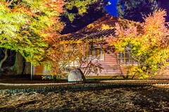 Maple At Night 正是吾廬秋好夜 (Sharleen Chao) Tags: travel autumn color building fall horizontal night canon landscape maple tour farm taiwan nopeople resort clear sunburst taichung bluehour 風景 redmaple sunflare 台中 楓葉 梨山 1635mm 福壽山農場 松廬 canoneos5dmarkiii canon5dmarkiii 日芒 和平區