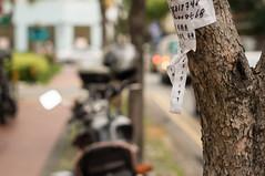 The Message (cpw123) Tags: tree paper 50mm singapore message minolta bokeh sony chinese number alpha maxxum joochiat katong f17 nex6 sonyalphaned6minoltamaxxum50mmprimef17singaporekatongchinesepapertreebokeh cpwebbcom
