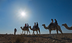 043_Dafna Tal_NEGEV_Camels_IMOT (Israel_photo_gallery) Tags: people fun israel camel leisure negev camels economy touring avdat dafnatal