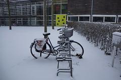 _DSC9105 (druif56) Tags: snow cold netherlands bomen sneeuw nederland takken koud