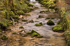 Chaltbrunnental 3, ND 1.8 Filter (gstarBS) Tags: water forest stream bach nd 18 wald graufilter chaltbrunnental