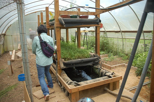 "Hoop House / Aquaponics System <a style=""margin-left:10px; font-size:0.8em;"" href=""http://www.flickr.com/photos/91915217@N00/12356344434/"" target=""_blank"">@flickr</a>"