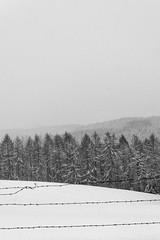 Grimberg 2 | Germany (www.jacktheflipper.de) Tags: winter white snow black art forest germany landscape jack photography europe seasons fine flipper fineartphotography grimberg fineartbw fineartphotobw