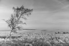 Leash Fen 1 (Steve Wood (peakscan)) Tags: mist peakdistrict birch moorland