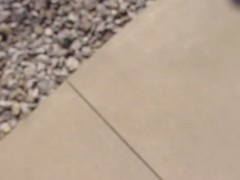 I took a video of the spiders to show how fast they moved (debstromquist) Tags: video illinois spring spiders wildlife il batavia fermilab arachnids sidewalks wolfspiders warmtemperatures sunbathingspiders