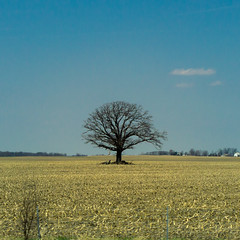 Solitude (chanlsrfer) Tags: road trip blue ohio sky tree field rural driving farm kentucky ky bluesky roadtrip exploration paranormal solitary waverly solitarytree rurex treeinfield paranormalinvestigation waverlyhillssanatarium