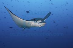 2013 11 VOISIN MALDIVES-2900