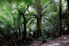 Mt Field National Park, Tasmania (set of 20) (Lesley A Butler) Tags: tasmania