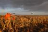 South Dakota Luxury Pheasant Lodge - Gettysburg 38