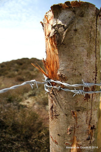 Barbed Wire on a Post 1