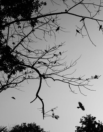 The crows are watching