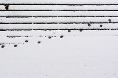 Low Sounds (Rainer ) Tags: schnee snow tones catprints noten codec katzenspuren unsergarten 35f18 rainer
