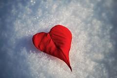Heart of ice (Luc1659) Tags: ice heart ngc neve foglia rosso cuore auguri tiltshift sanvalentinday