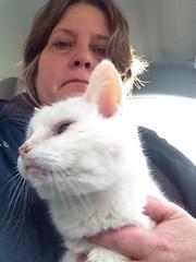 Last minutes with Spooky (Rochelle Hartman) Tags: old friends white loss cat death sad heart companion breaking heartbroken