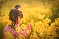 菜の花と少女 (のの♪) Tags: 菜の花