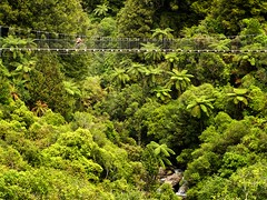Riding high (loveexploring) Tags: newzealand fern green stream cyclist valley northisland lush suspensionbridge cycleway newzealandbush timbertrail newzealandcycletrail ngahaerenga