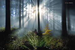 En busca de la luz (Jabi Artaraz) Tags: light naturaleza luz nature landscape natura paisaje bosque zb euskadi basquecountry haya paysbasque argia helechos basoa pagoa abetos garoa euskoflickr baskeland enbusca enbuscadelaluz jartaraz izeak hayita