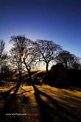 Early Winter Sun (Mark Winterbourne | markwinterbourne.com) Tags: england tree canon photography photographer shadows unitedkingdom leeds lawn westyorkshire skipton 24105 eos5d markwinterbourne 100400yeadon httpmarkwinterbournecom