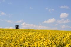 Hunting in the field (Xtraphoto) Tags: sky field yellow clouds landscape hunting himmel gelb landschaft raps oilseed rapsfeld hochstand jger jgerstand