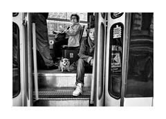 Beware of the dog! (Jan Dobrovsky) Tags: street people bw dog monochrome contrast prague grain tram document leicaq