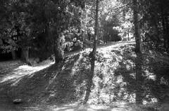 Praktica MTL5 with MIR-1V - Brno Reservoir Trip 04 (Kojotisko) Tags: bw brno creativecommons czechrepublic rodinal czechia mir1b fomapan100 mtl5 prakticamtl5 mir1v brnenskaprehrada mir1v37mmf28 brnoreservoir prehrada05062016