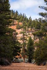 IMG_3798[1] (Eric.Burniche) Tags: travel nature utah desert outdoor brycecanyon brycecanyonnationalpark roadtr