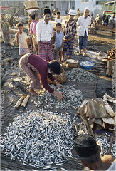 Sape Fish Market (channel packet) Tags: people fish indonesia island market local komodo sellers sumbawa sape