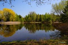 Le miroir des arbres (hmeyvalian) Tags: pond montral tang jardinbotanique montrealbotanicalgarden stagno giardinobotanico qubeccanada