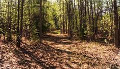 A walk in the forest . . . (JLS Photography - Alaska) Tags: trees tree leaves alaska forest painting landscape spring woods outdoor digitalart digitalmanipulation yukonterritory jlsphotographyalaska