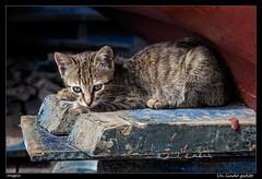 Un lindo gatito (meggiecaminos) Tags: animal cat cub kitten streetphotography morocco gato cachorro marocco marruecos puss gatto pussycat animale cucciolo gatito micio gattino asilah animalito minino fotografaurbana
