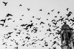 The Birds, Lima Downtown (Geraint Rowland Photography) Tags: blackandwhite blancoynegro church birds pigeons streetphotography lightroom travelphotography canonphotography downtownlima centrallima editingphotos limadowntown coloniallima blackandwhitephotographyinperu geraintrowlandphotographyinlima birdsinlima