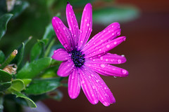 Sin ttulo (Eduardo Valero Suardiaz) Tags: flower verde green garden purple flor violet jardin violeta morado