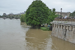 2016.06.02.068 PARIS - La Seine en crue au square du Vert Galant (alainmichot93 (Bonjour  tous)) Tags: paris france seine square eau ledefrance fleuve crue laseine 2016 squareduvertgalant