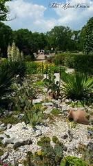 Balcic (Aly D.) Tags: balchik balcic bulgaria gradina garden flori flowers cactusi jardin