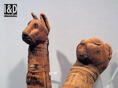 mcat2 (Internet & Digital) Tags: mummy mummified cats ibis victorian mummifiedcats thoth hawk sacrifice ritual ancient ancientegypt offerings god isis horus osirus egypt giftstothegods exhibition glasgow kelvingrovemuseum animalmummycatmummygiftstothegodsexhibitionglasgowkelvingrovemuseummummifiedcatsancientegyptegyptcroccodilecatheadibisvictoriansacrificeritualancientofferingsgodc21troyidmedia