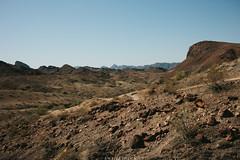 5R6K2455 (ATeshima) Tags: arizona nature havasu