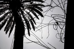 Lines in silhouette (marco.giordana) Tags: barcelona travel sunset bw white holiday black building tree nature strange lines silhouette architecture wow wonderful evening nikon details palm espana particular wired catalunya feeling es emotions parc barrio barcelone gotico catalogna d90 particulars nikonist