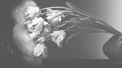 immersion (MacroMarcie) Tags: flowers strange dark tulips explore mapplethorpe mysterious tribute wah werehere hereios macromarcie