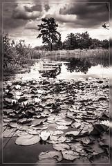 De Maten - Diepenbeek (d_smets) Tags: diepenbeek landschap vijver
