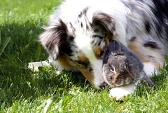 Charly and Balu (Giuliana_V) Tags: friends dog sun rabbit love animal animals sweet sunny lovely