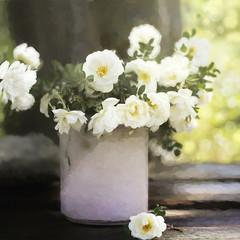 White roses (BirgittaSjostedt) Tags: light plant flower art texture rose table still paint blossom bokeh outdoor unique painted pot magicunicornverybest birgittasjostedt
