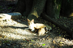Today's Cat@2016-07-05 (masatsu) Tags: cat pentax catspotting mx1 thebiggestgroupwithonlycats